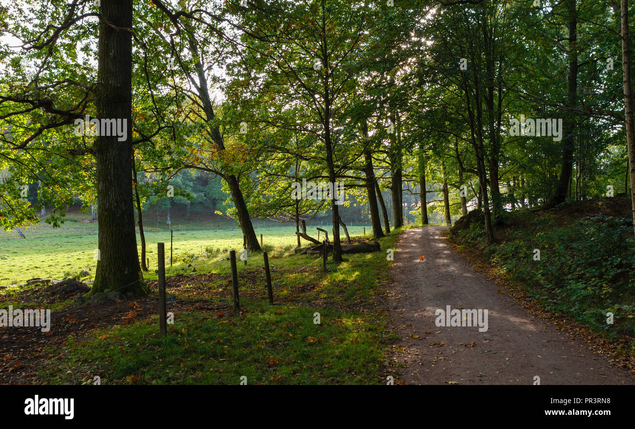 Small road though wooden landscape - Stock Image
