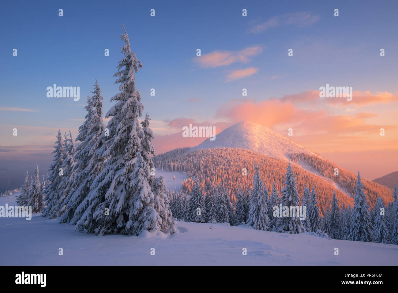 Christmas landscape with fir trees in the snow. Winter in the ...