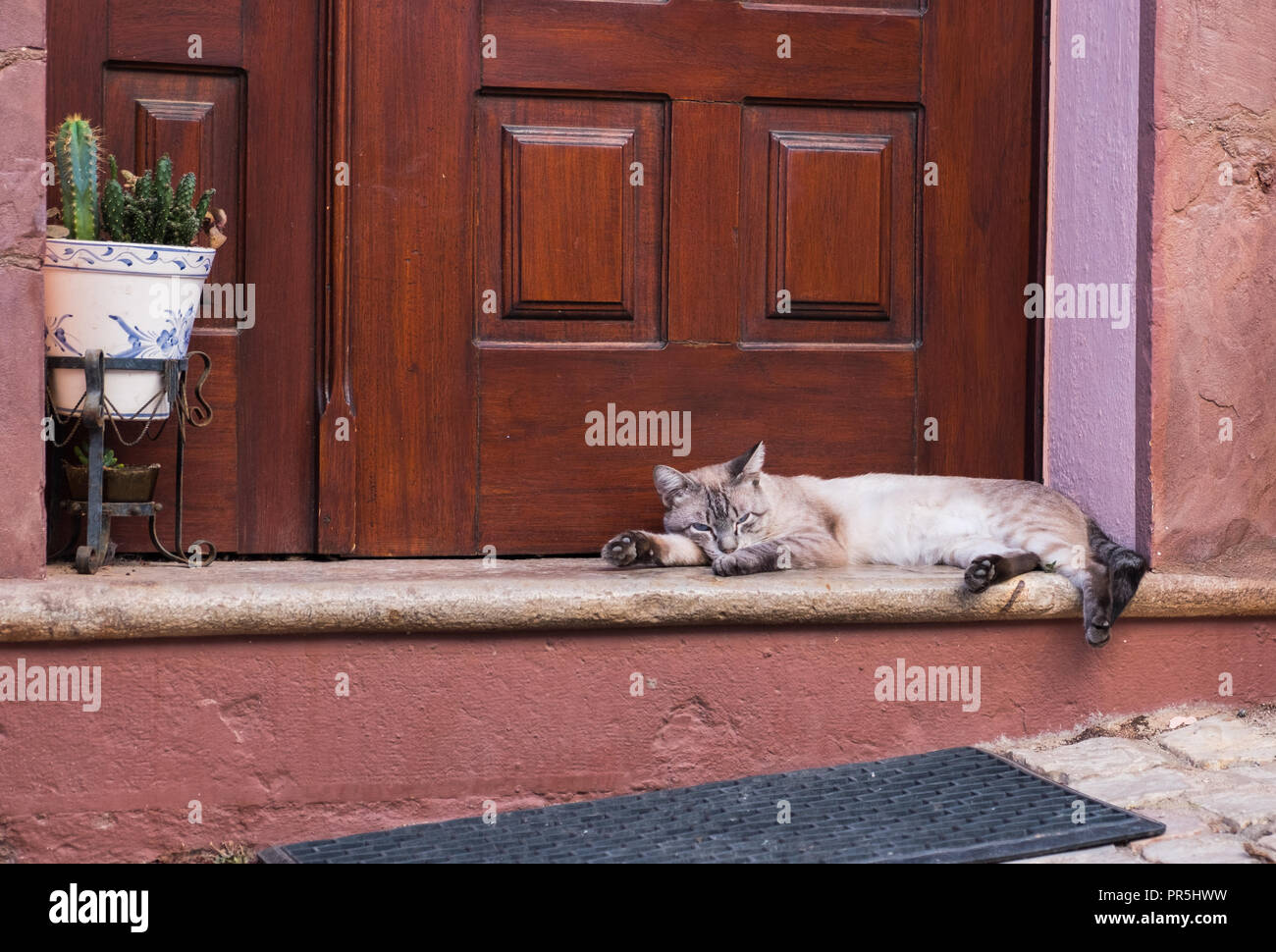 Sleeping siamese gray cat, outside a nice house. - Stock Image