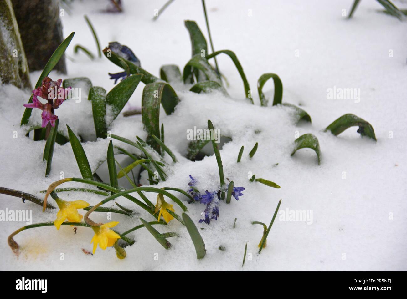 Winter Flowers Snow Season Stock Photo 220788138 Alamy