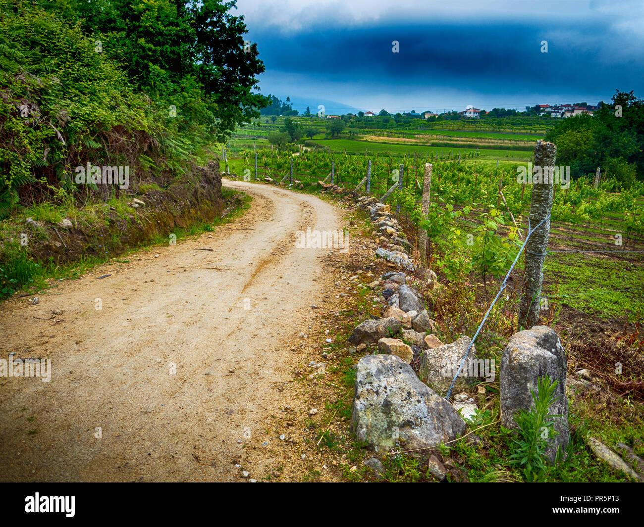 Rural Road Through a Portuguese Vineyard on the Camino de Santiago - Stock Image