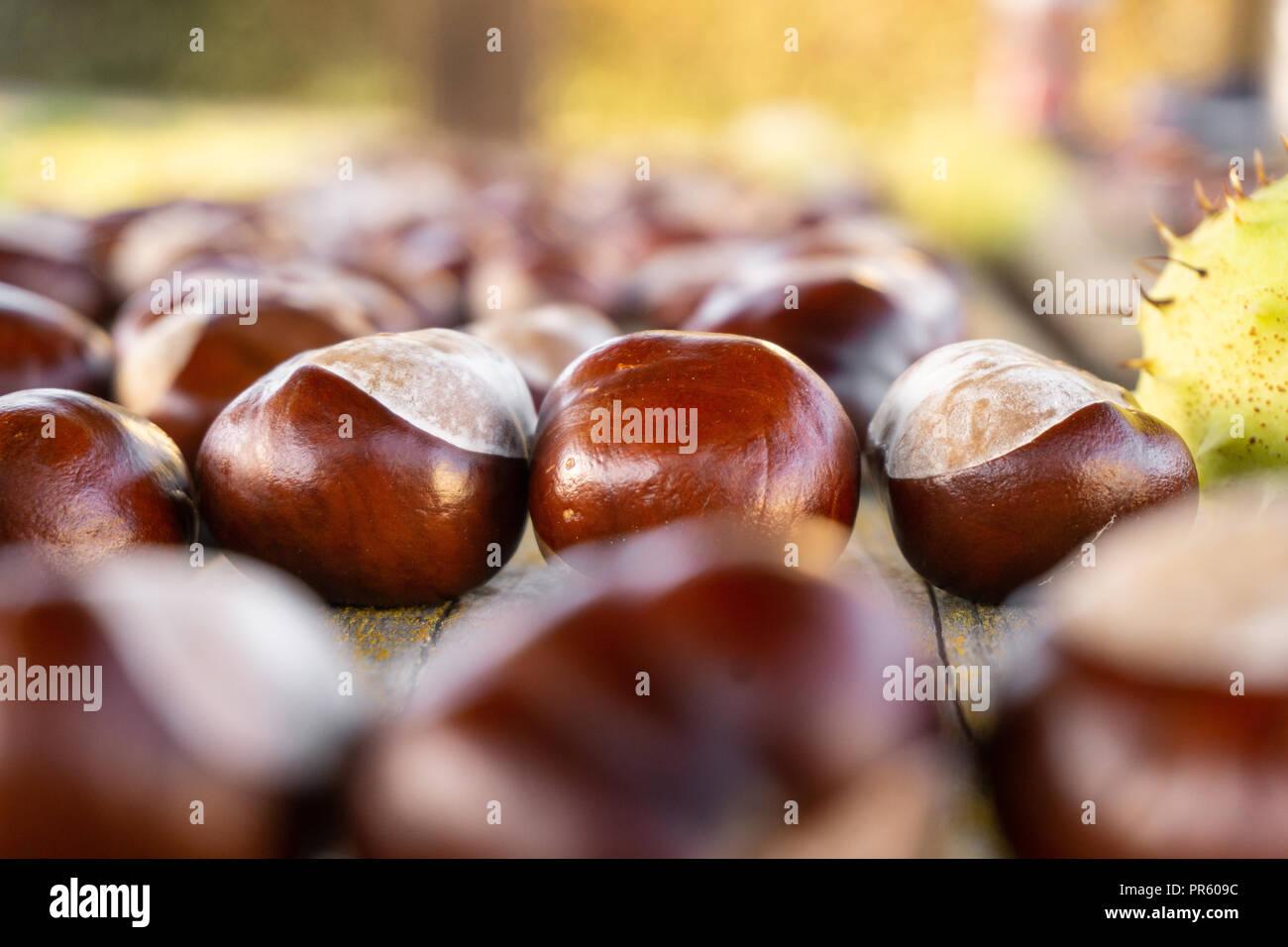 Kastanien auf Holztisch - Stock Image