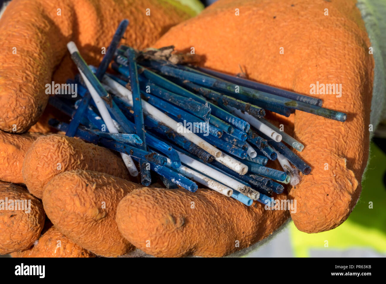 plastic cotton buds removed from River Clyde - Stock Image