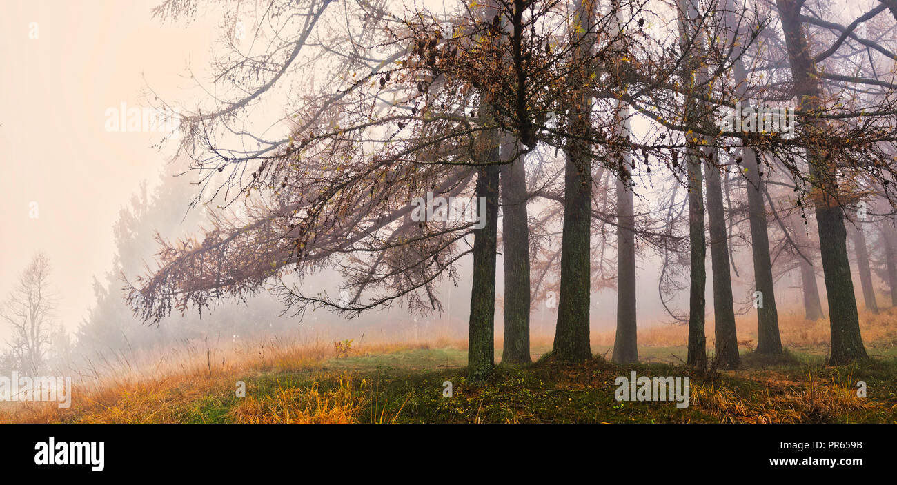 Fog and autumn colors in the forest of regional park Campo dei Fiori Varese - Stock Image