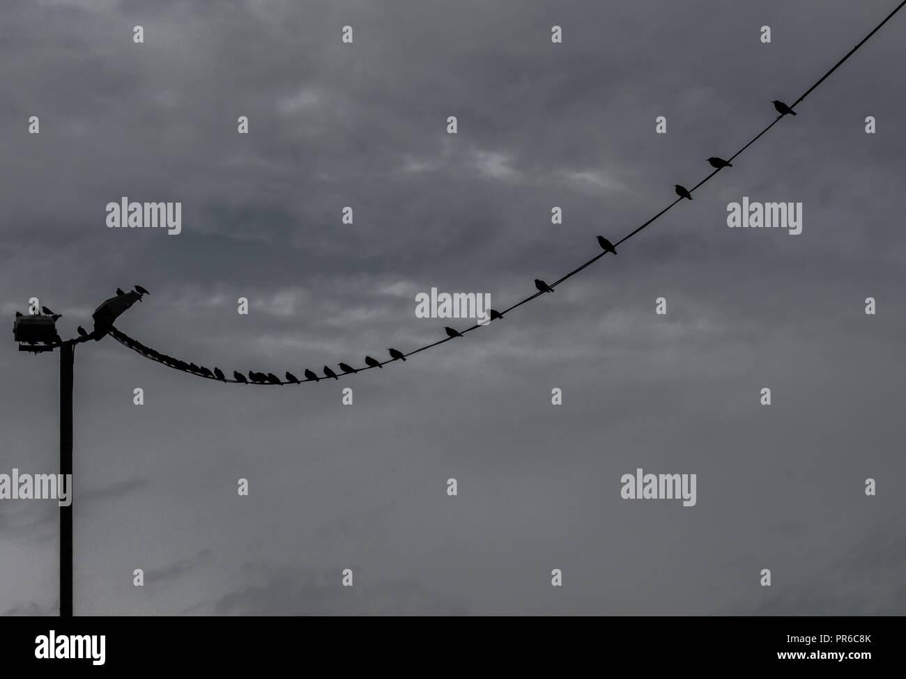 Birds sitting on telephone wire. Wallasey,Merseyside, UK Stock Photo