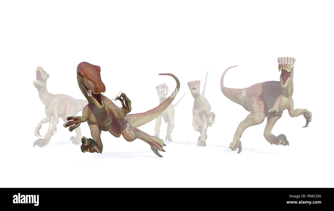 velociraptor pack, hunting theropod dinosaurs coming out of the mist, 3d illustration isolated on white background - Stock Image