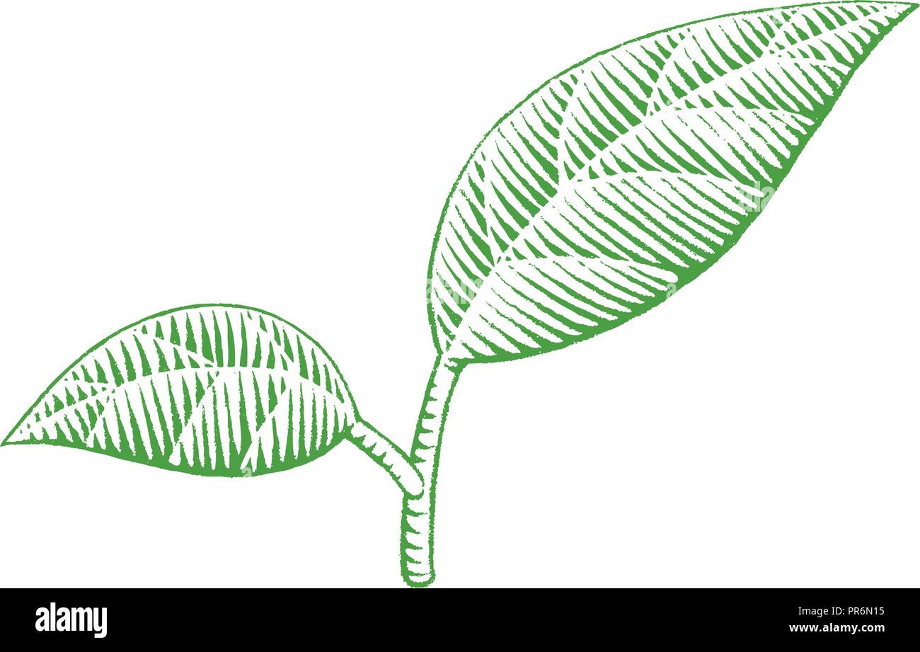 Illustration of Green Vectorized Ink Sketch of Leaves isolated on a White Background - Stock Vector
