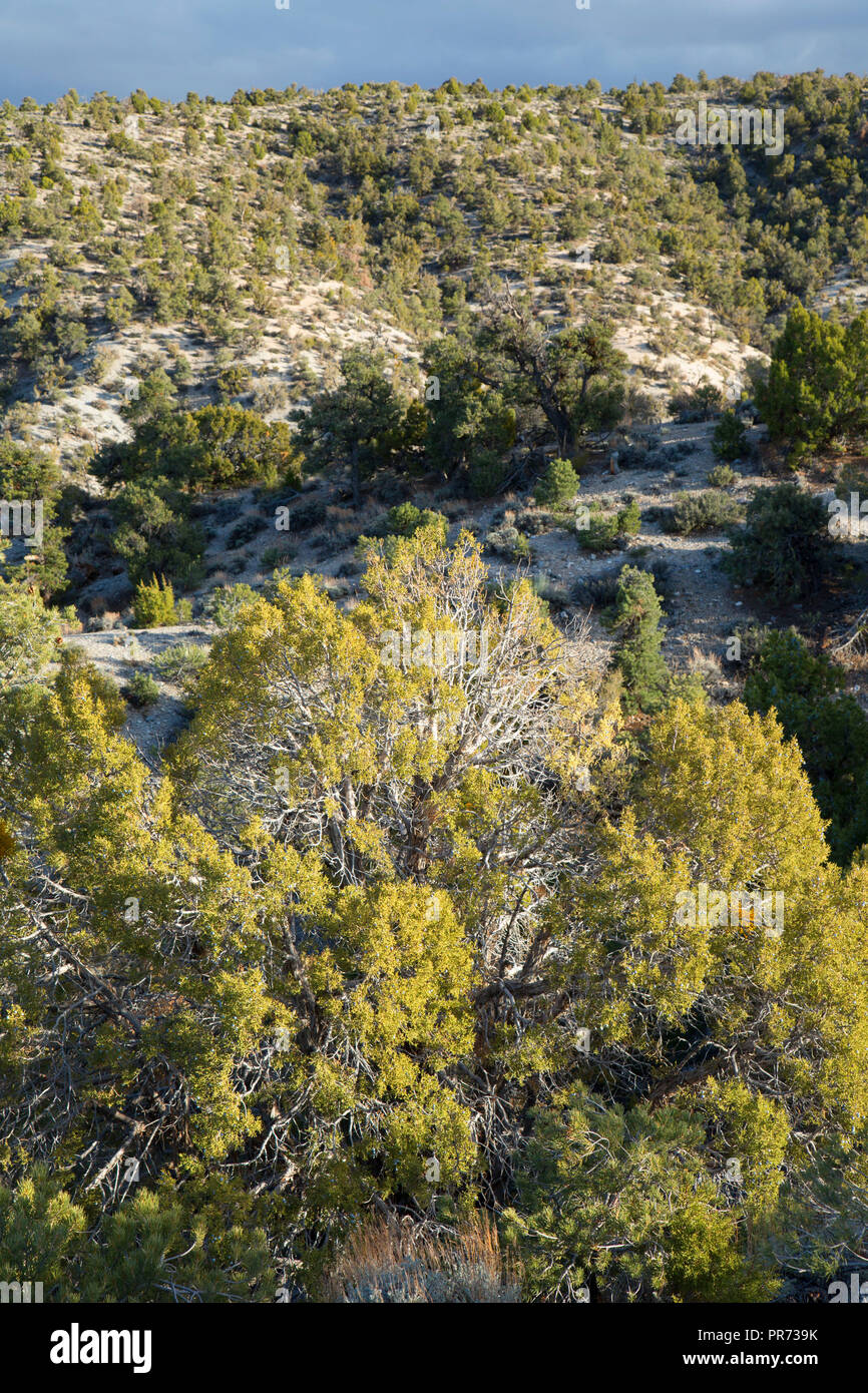 Spring Mountains Nevada Stock Photos Amp Spring Mountains