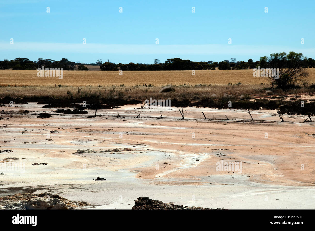 Chinocup Nature Reserve Western Australia, landscape of dry salt bed with wheat crop in background - Stock Image