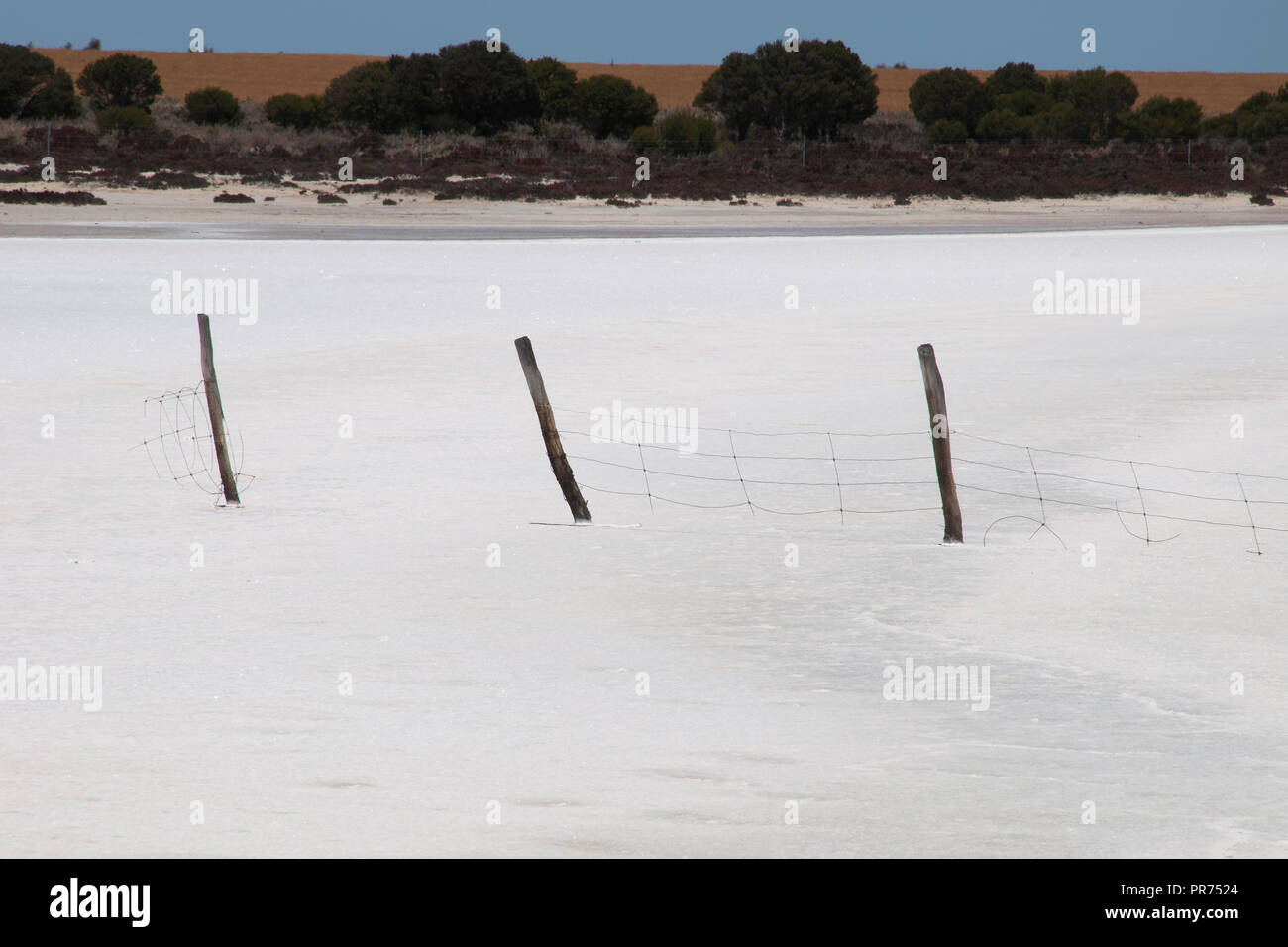 Chinocup Nature Reserve Western Australia, line of wooden fence posts crossing dry salt lake with wheat crop in background - Stock Image