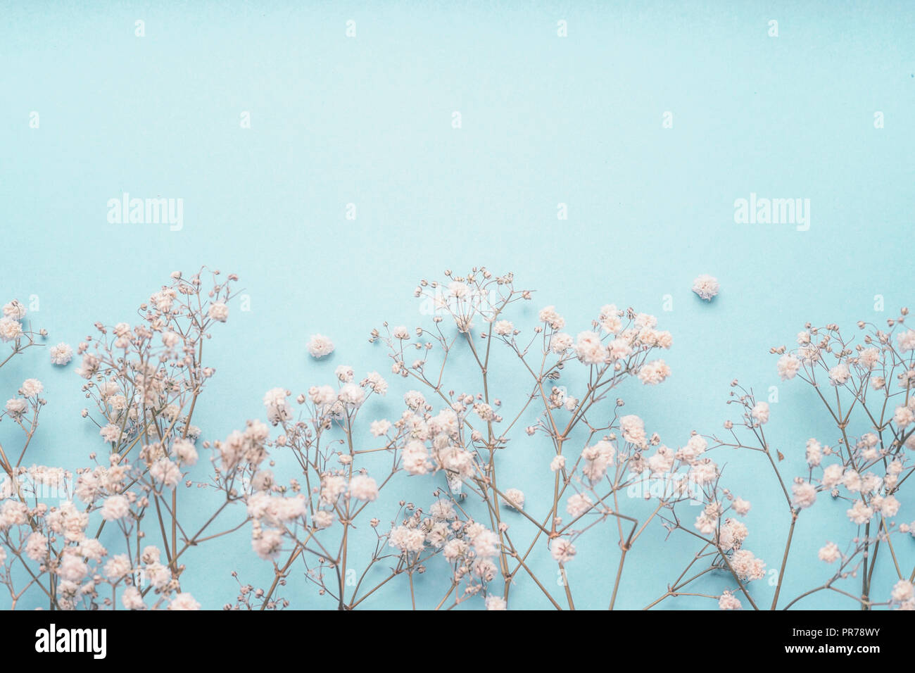 Light Blue Floral Background Border With White Gypsophila Flowers