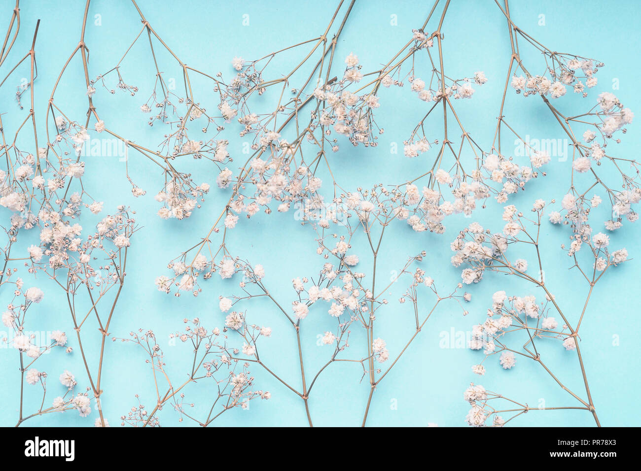Light Blue Floral Background With White Gypsophila Flowers Babys