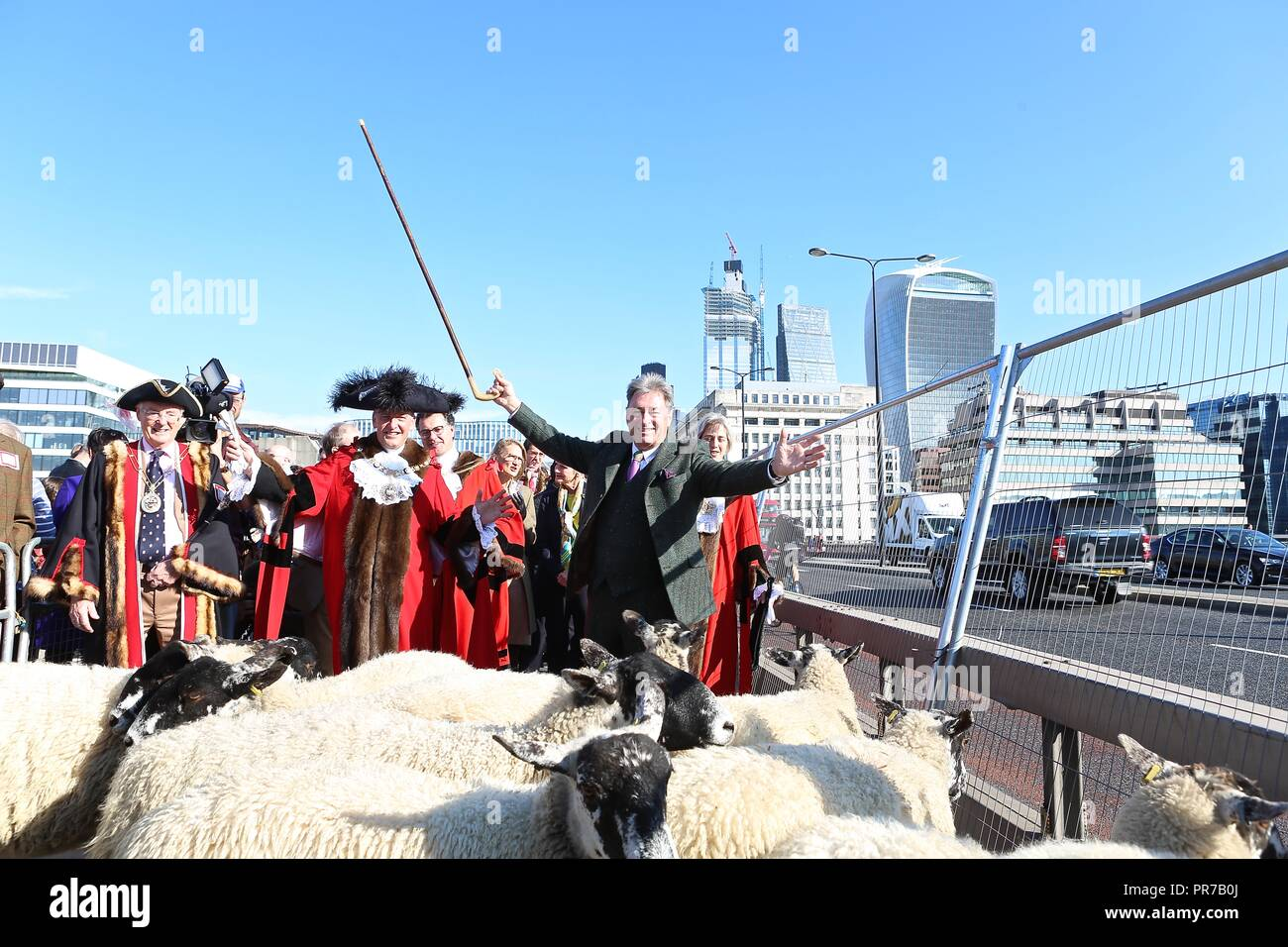 ALAN TITCHMARSH DRIVES SHEEP 2018 Stock Photo
