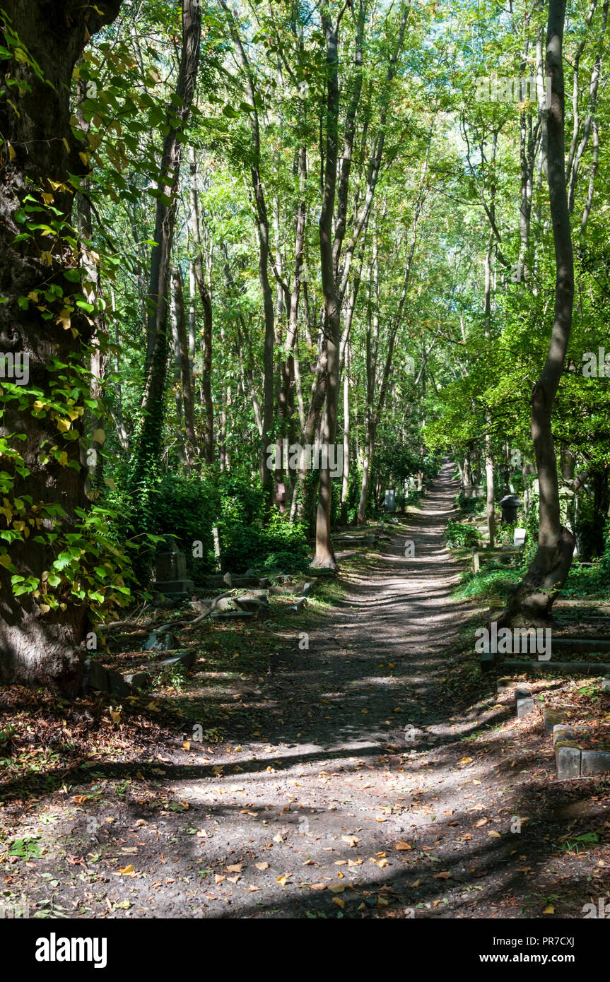 A path through Highgate Cemetery with graves among the trees. Stock Photo