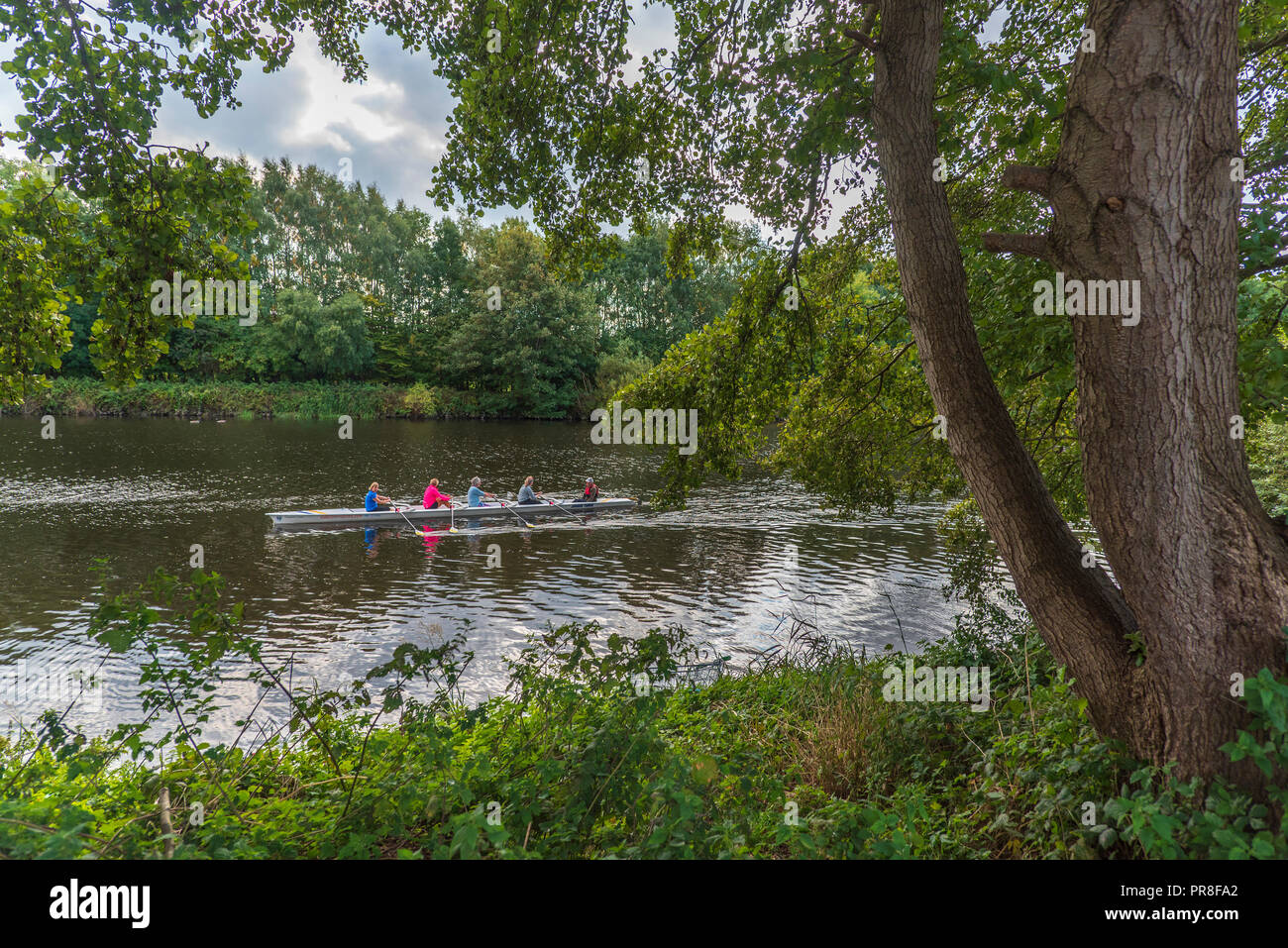 River Mersey at Latchford, Warrington. Rowers - Stock Image