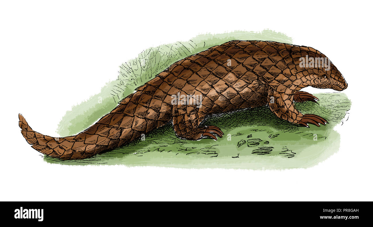 19th century illustration of a pangolin, also known as a scaly anteater or trenggiling. Published in Systematischer Bilder-Atlas zum Conversations-Lex - Stock Image