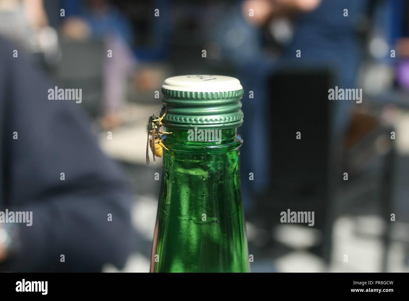 Wasp on bottle - Stock Image