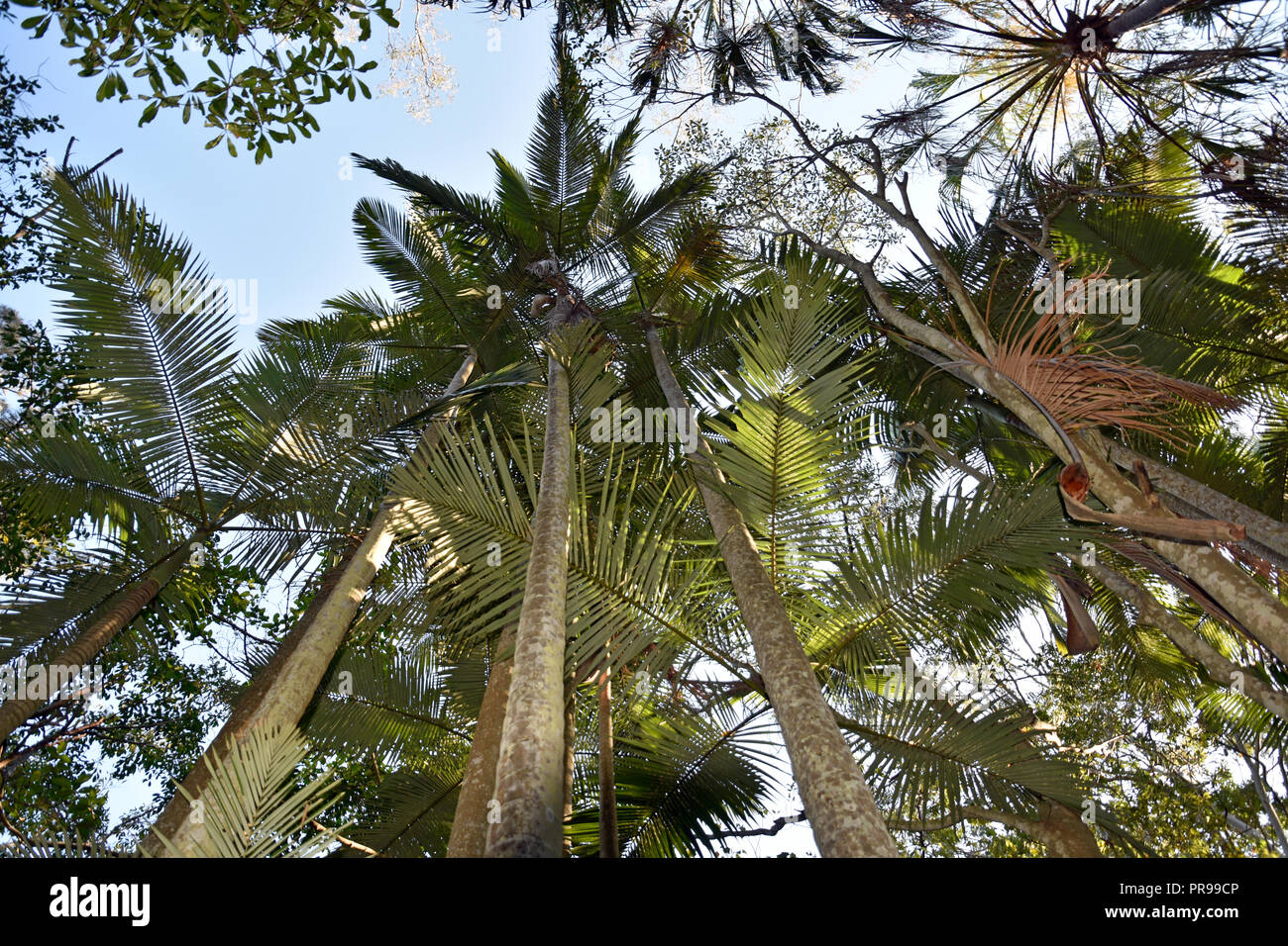Australian Native Trees High Resolution Stock Photography And Images Alamy