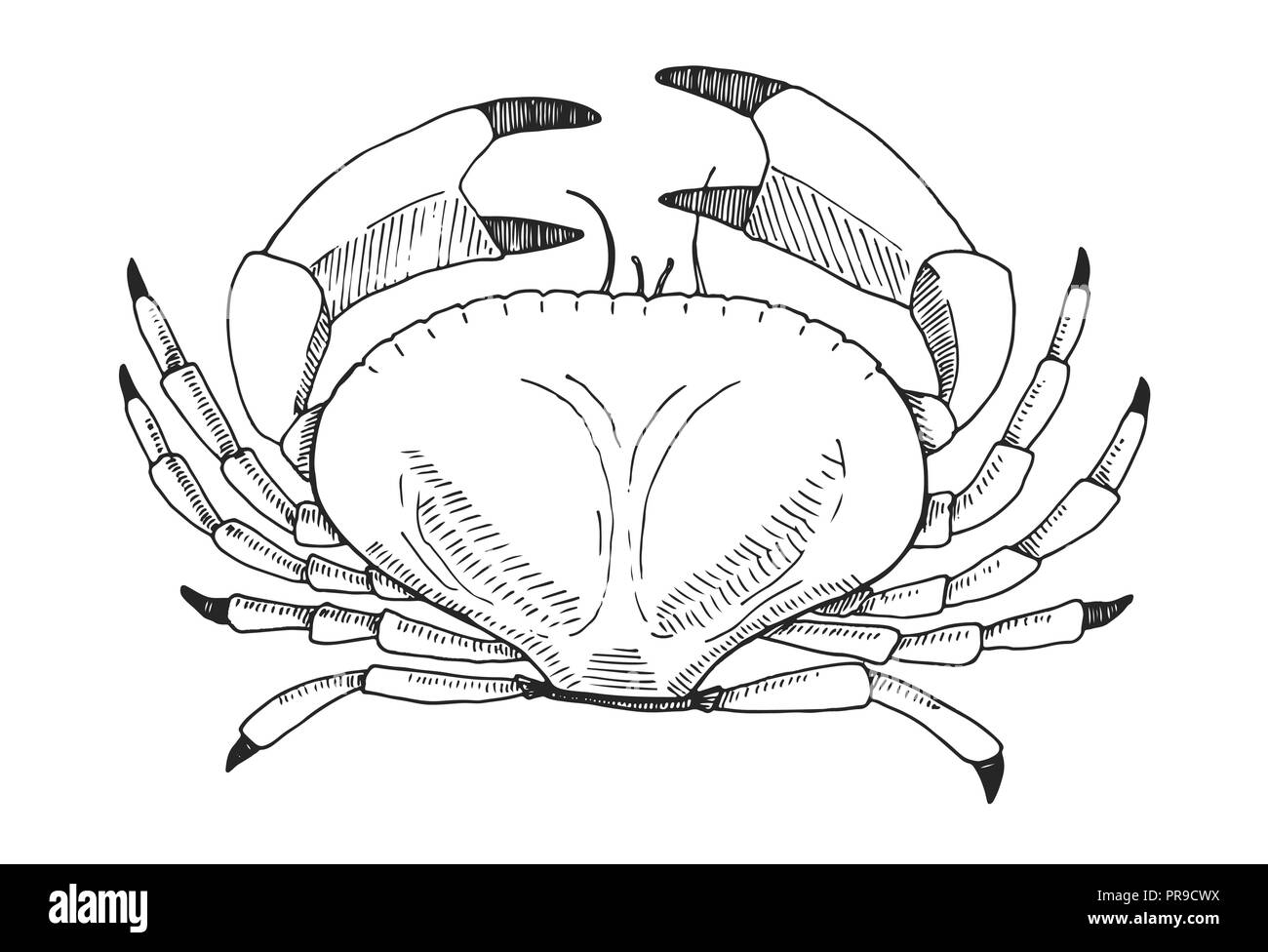 Hand drawn crab. Vector illustration in sketch style - Stock Vector
