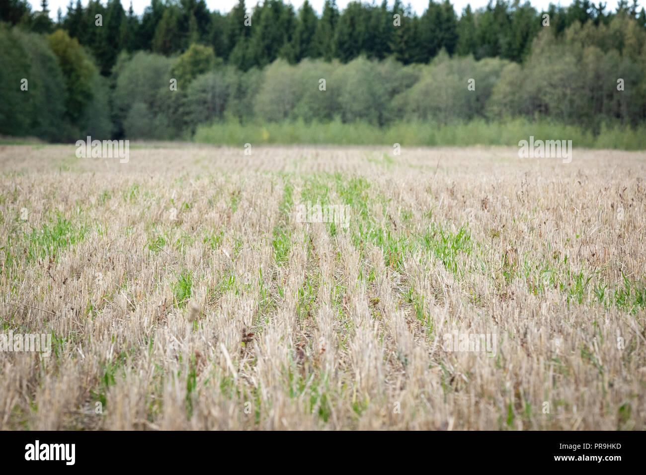 Lithuania Farm Farmer Agriculture Field Stock Photos