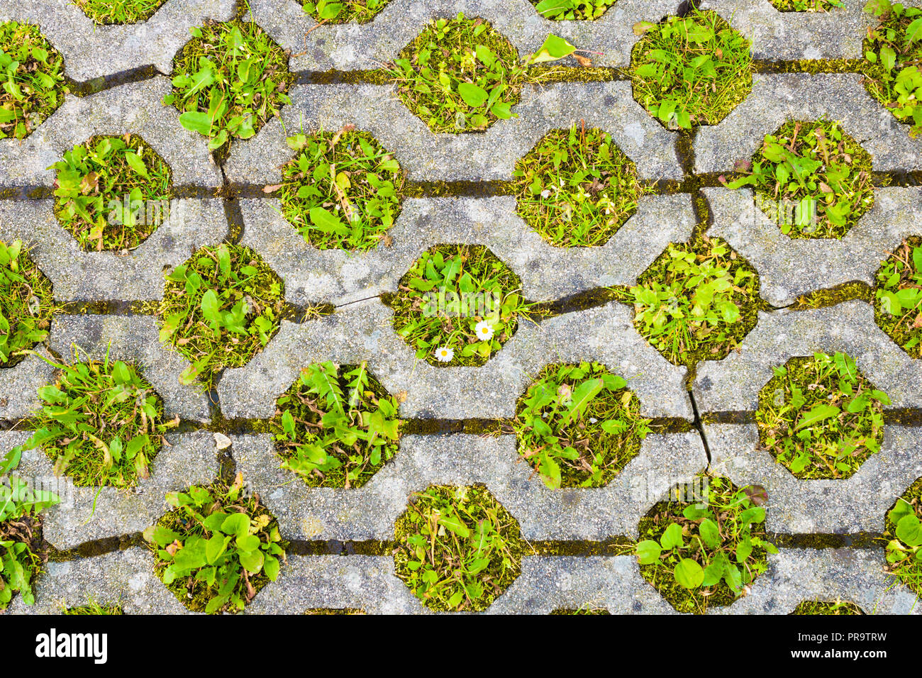 Eco permeable pavement with grass growing through it. Environmentally friendly green parking. - Stock Image