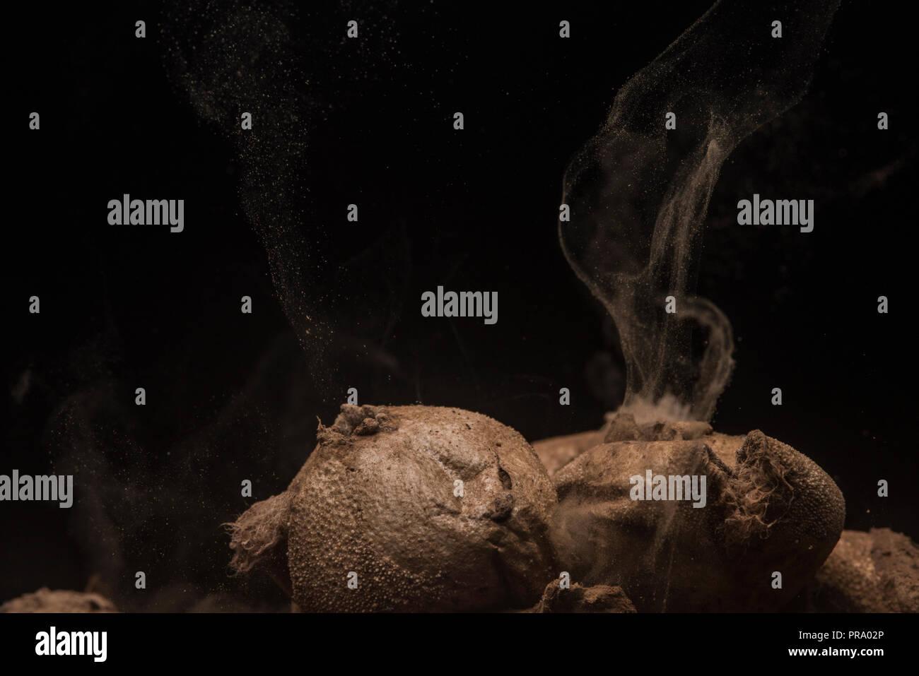 Black Spores Stock Photos & Black Spores Stock Images - Alamy