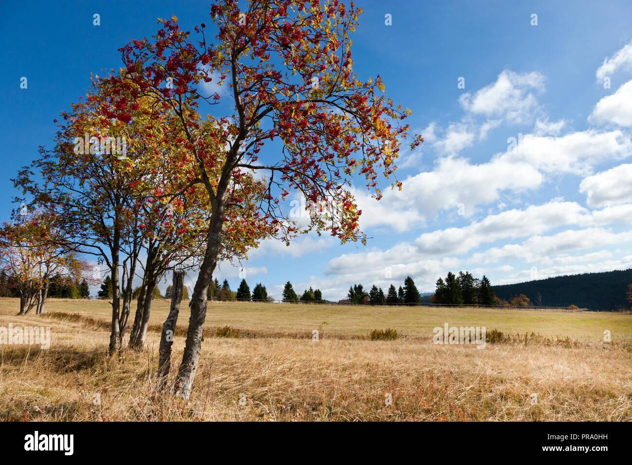 Hřebečná, Abertamy, Krusne hory, Ceska republika /  Abertamy, Hrebecna, Krusne hory mountains (Ore Mountains), Czech republic - Stock Image