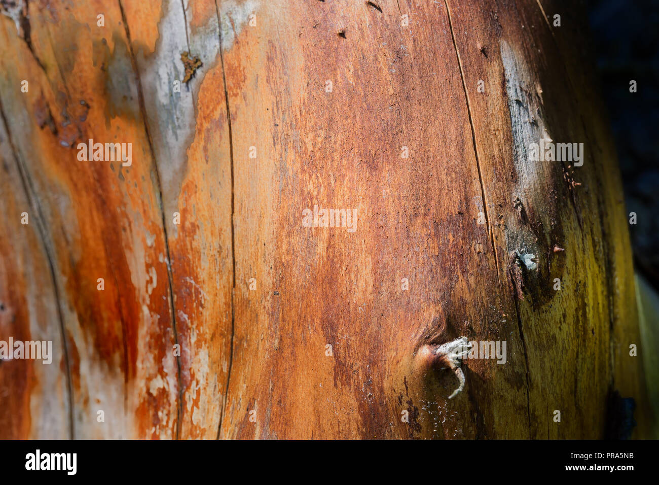 A close up log, without bark, in warm golden tones. - Stock Image