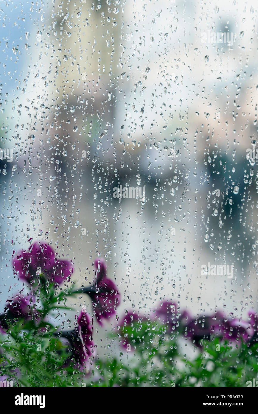Rain drops on wet window and street violet flowers behind, blur city bokeh. Concept of rainy weather, seasons, modern city. Place for text, vertical abstract background - Stock Image
