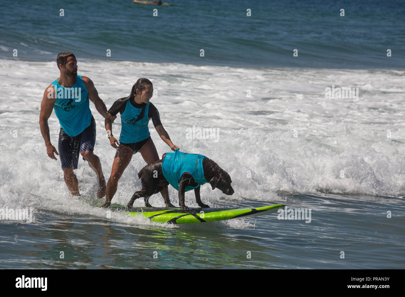 Huntington Beach, California, USA. 29th Sept, 2018. September 29, 2018 - San Diego-based Koa surfing tandem with owner Lee Chaille and friend at the Surf City Surf Dog Comptetition in Huntington Beach, CA, USA Credit: Kayte Deioma/Alamy Live News - Stock Image