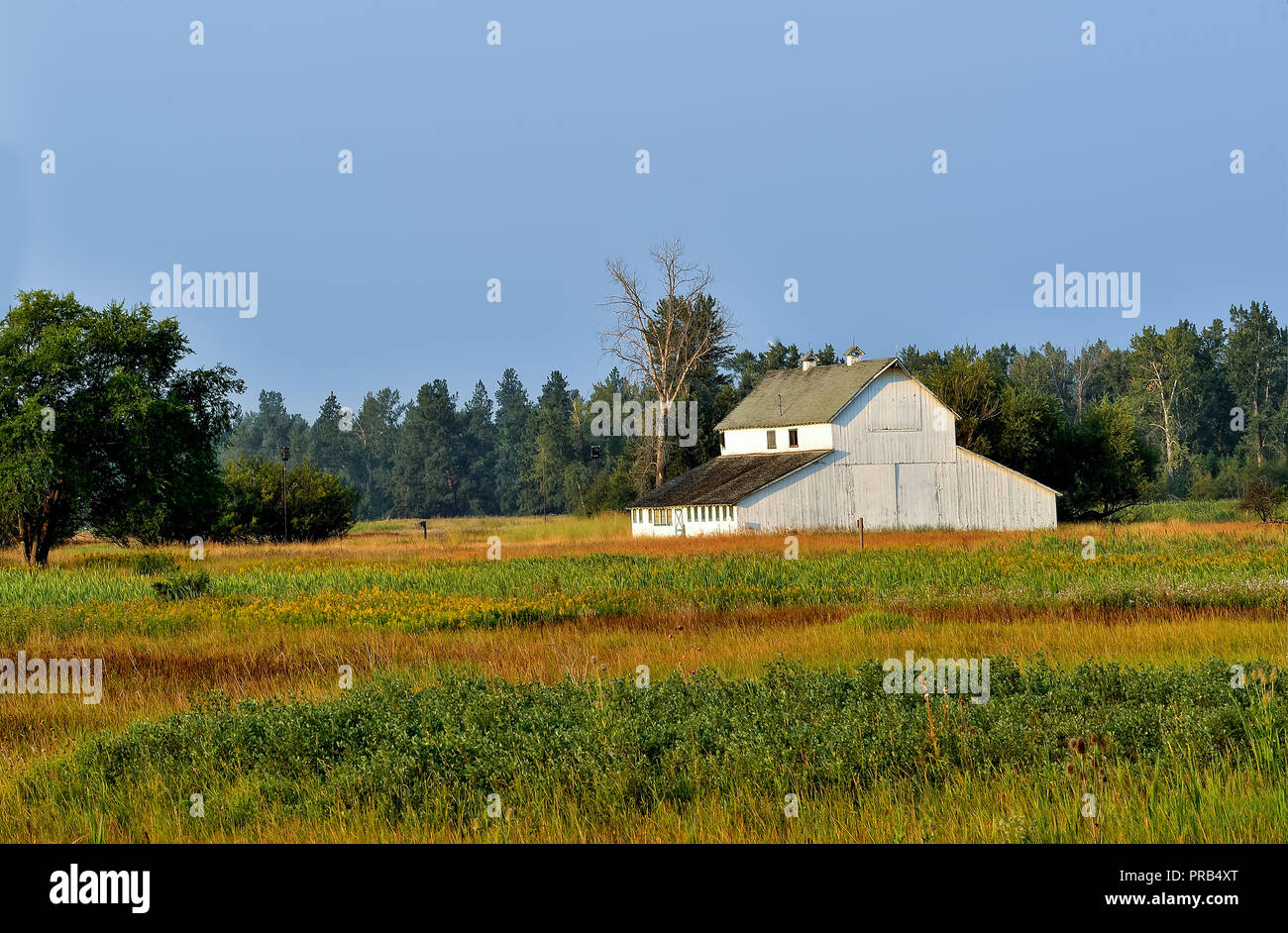 A white barn and  foliage in the Lee Metcalf National Wildlife Refuge. This tranquil scene is near Stevensville, Montana - Stock Image