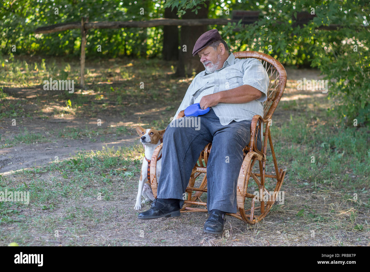 Terrific Cute Basenji Dog Waiting Till Senior Master Rest In A Wicker Squirreltailoven Fun Painted Chair Ideas Images Squirreltailovenorg