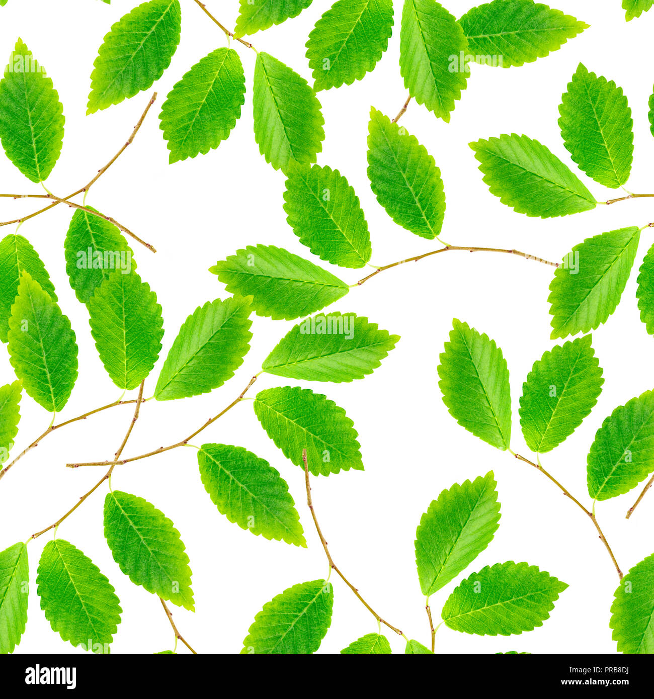 A seamless pattern of green leaves and branches on a white background, a vibrant repeat print - Stock Image
