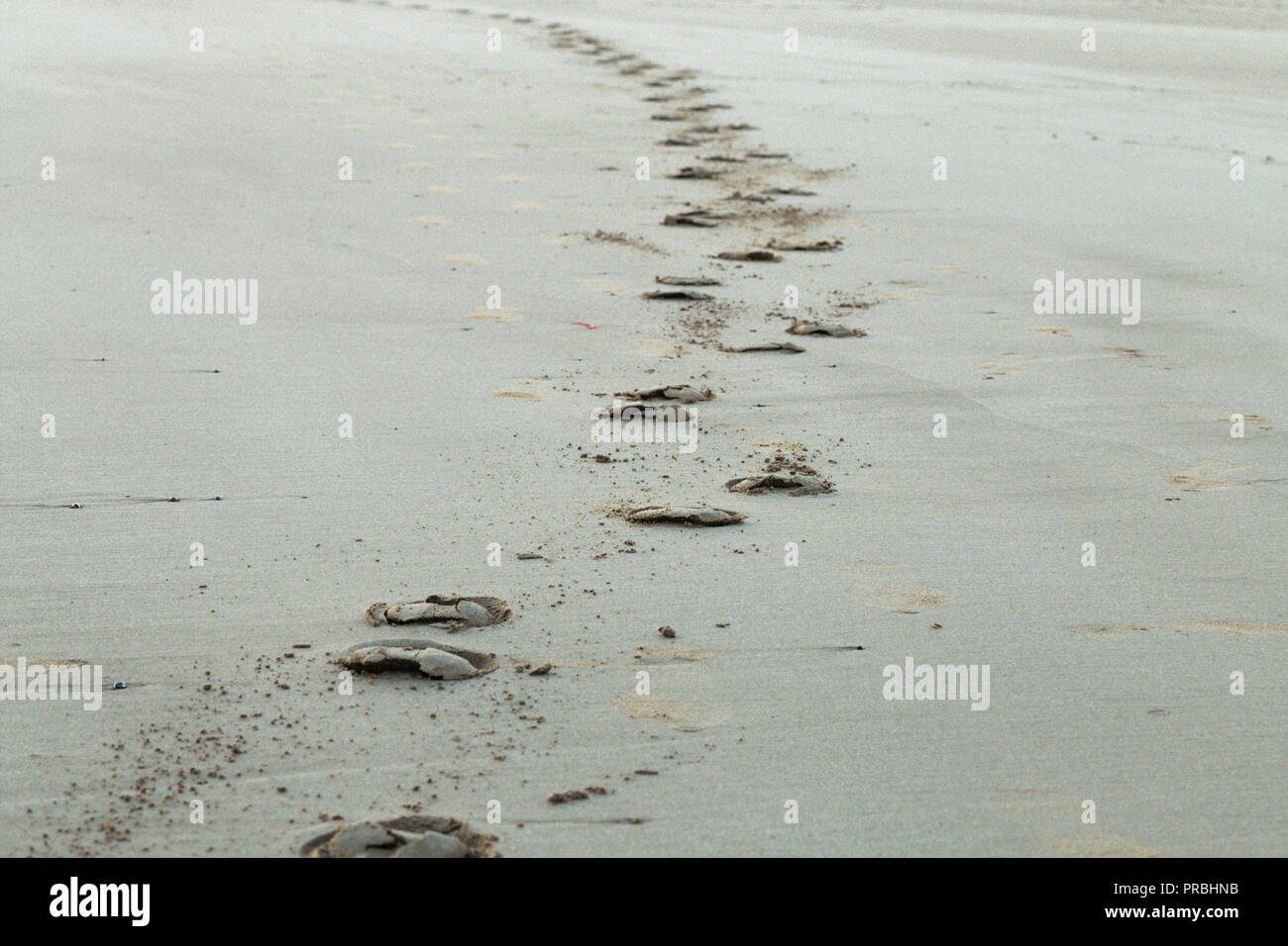 Horse hoof prints on wet smooth beach sand in Pembrokeshire, Wales, UK - Stock Image