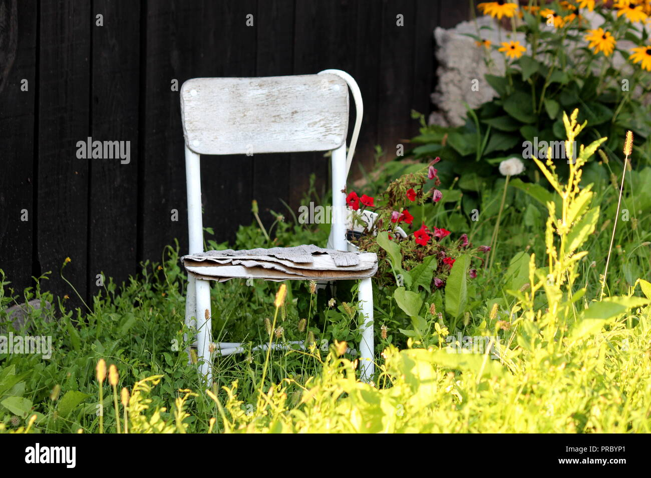 Surprising Old Cracked White Wooden Chair Left As Decoration In Shade Dailytribune Chair Design For Home Dailytribuneorg
