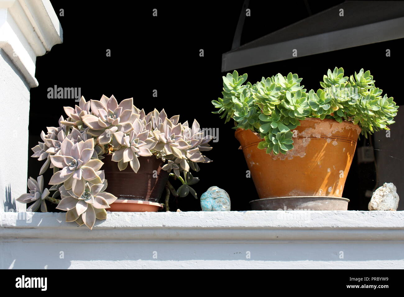Sedum or Stonecrop perennial leaf succulent with water-storing leaves two different color plants growing from small clay flower pots on top of stone - Stock Image