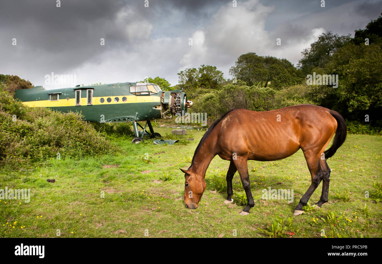 Bantry, Cork, Ireland. 05th June, 2010. An Antonov an-2 biplane lies abandonded in a field while a horse grazes outside Bantry, Co. Cork, Ireland. - Stock Image