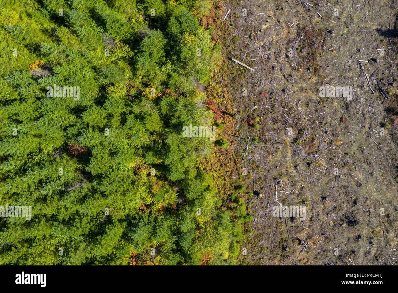 Deforestation Aerial View Stock Photos & Deforestation