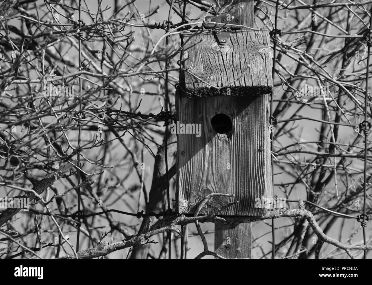 Bird house on the Weaselhead trail in Calgary - Stock Image