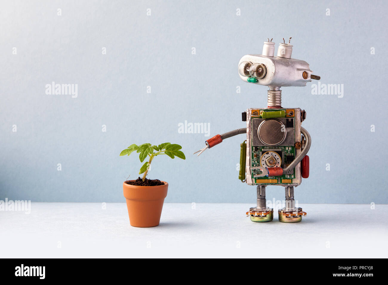 Robot with a small green sprout plant in a clay flower pot. Organic eco life concept. Gray wall background, copy space - Stock Image