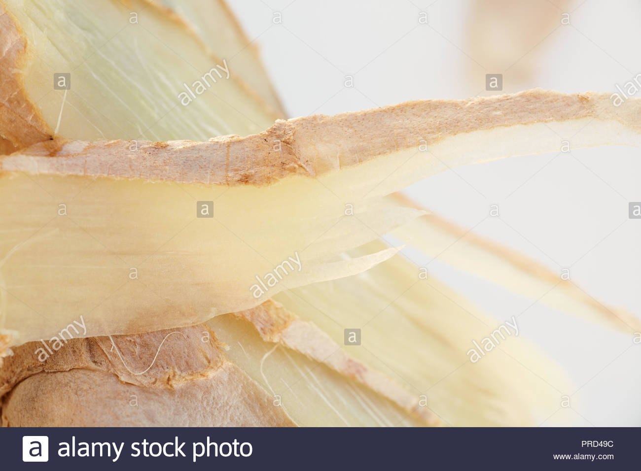 Fresh ginger, with rind still on, sliced and shot up close with a macro lens. - Stock Image
