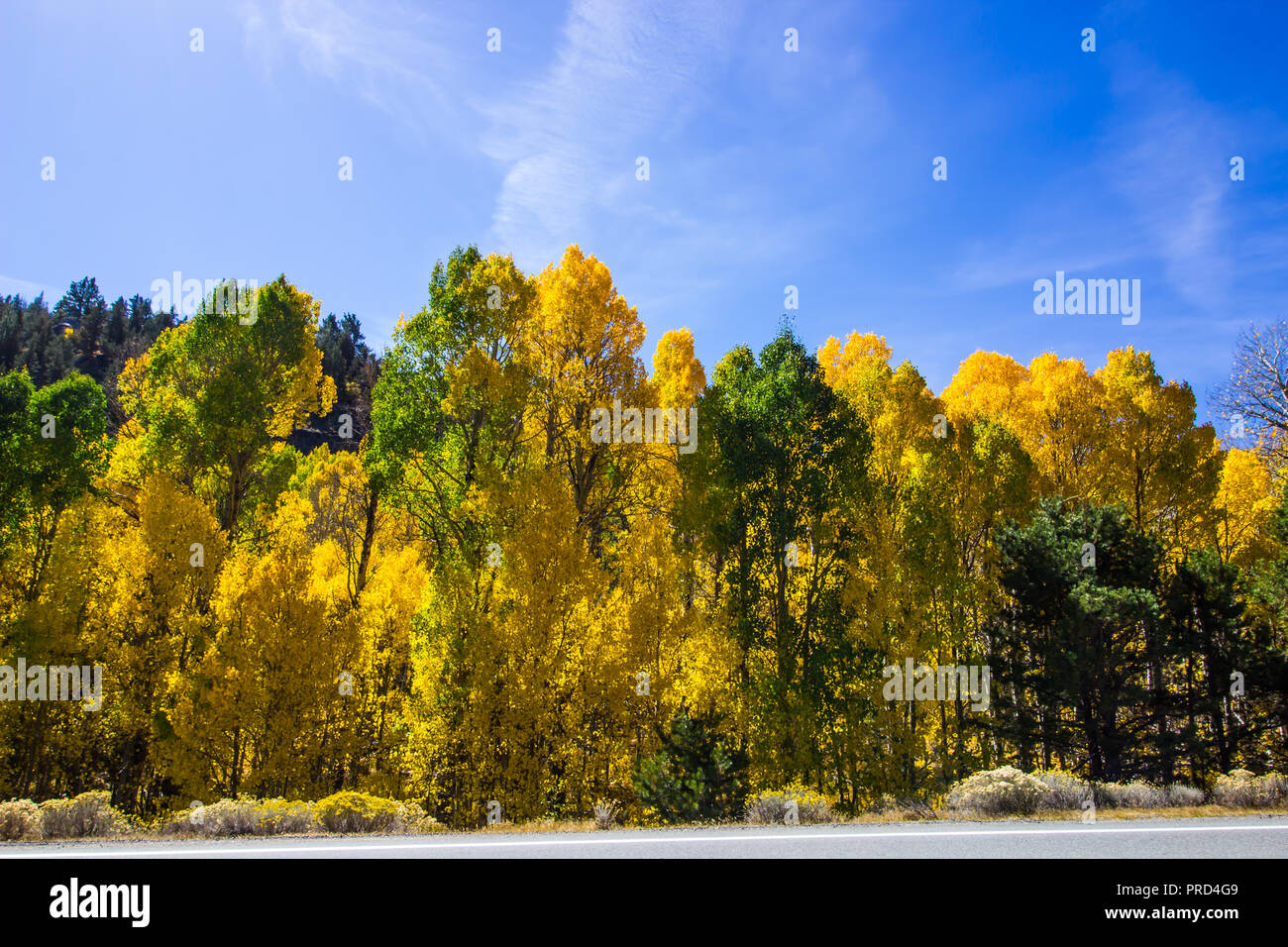 Falls Changing Colors For Trees In Mountains - Stock Image