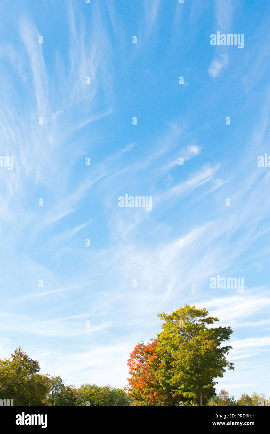 Blue sky, trees and white cirrus cloud background lanscape in fall - Stock Image