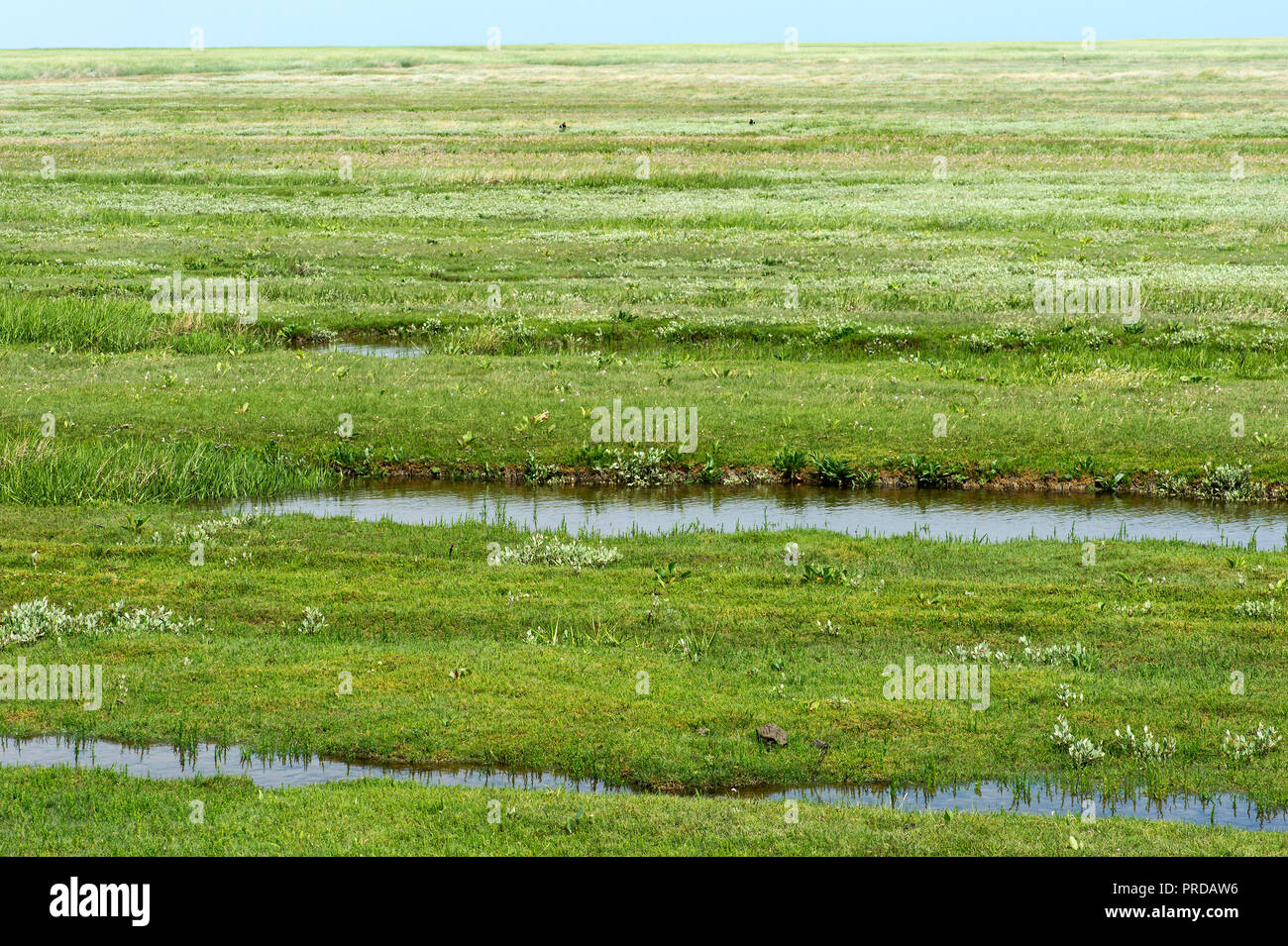 Salt marshes in the transition between sea and land, North Sea coast, Schleswig-Holstein, Germany - Stock Image