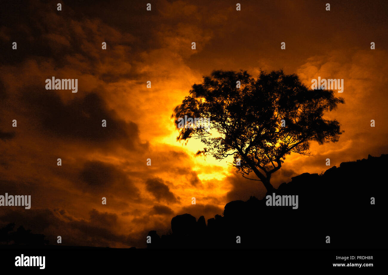 Hawthorn tree silhouette against a dramatic sky as the sun breaks through the clouds - Stock Image
