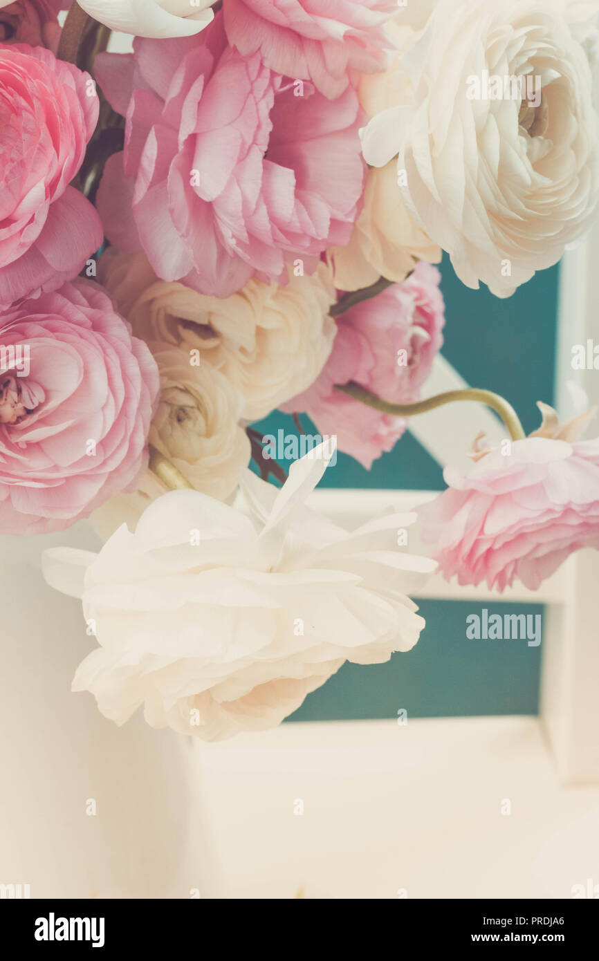 Pink And White Ranunculus Flowers Stock Photo 220961278 Alamy