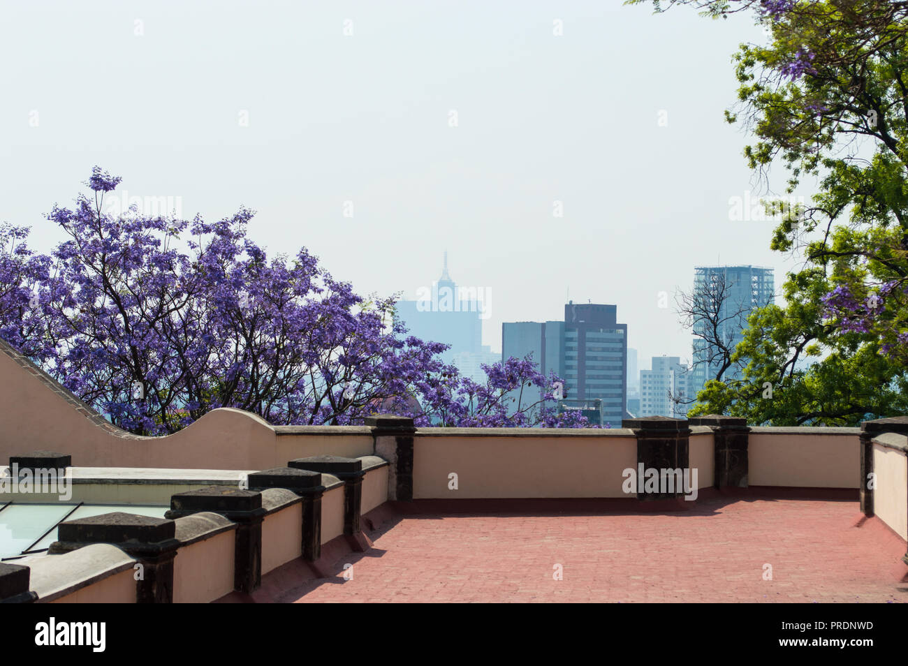 View from top of Chapultepec castle with city Skyline including the World Trade Center. Jacaranda trees and grey sky,  Mexico City. - Stock Image