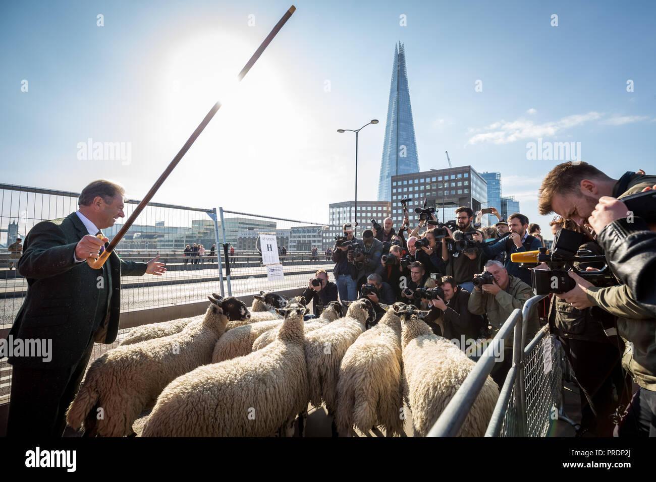 London, UK. 30th September, 2018. Annual Sheep Drive across London Bridge. Credit: Guy Corbishley/Alamy Live News Stock Photo