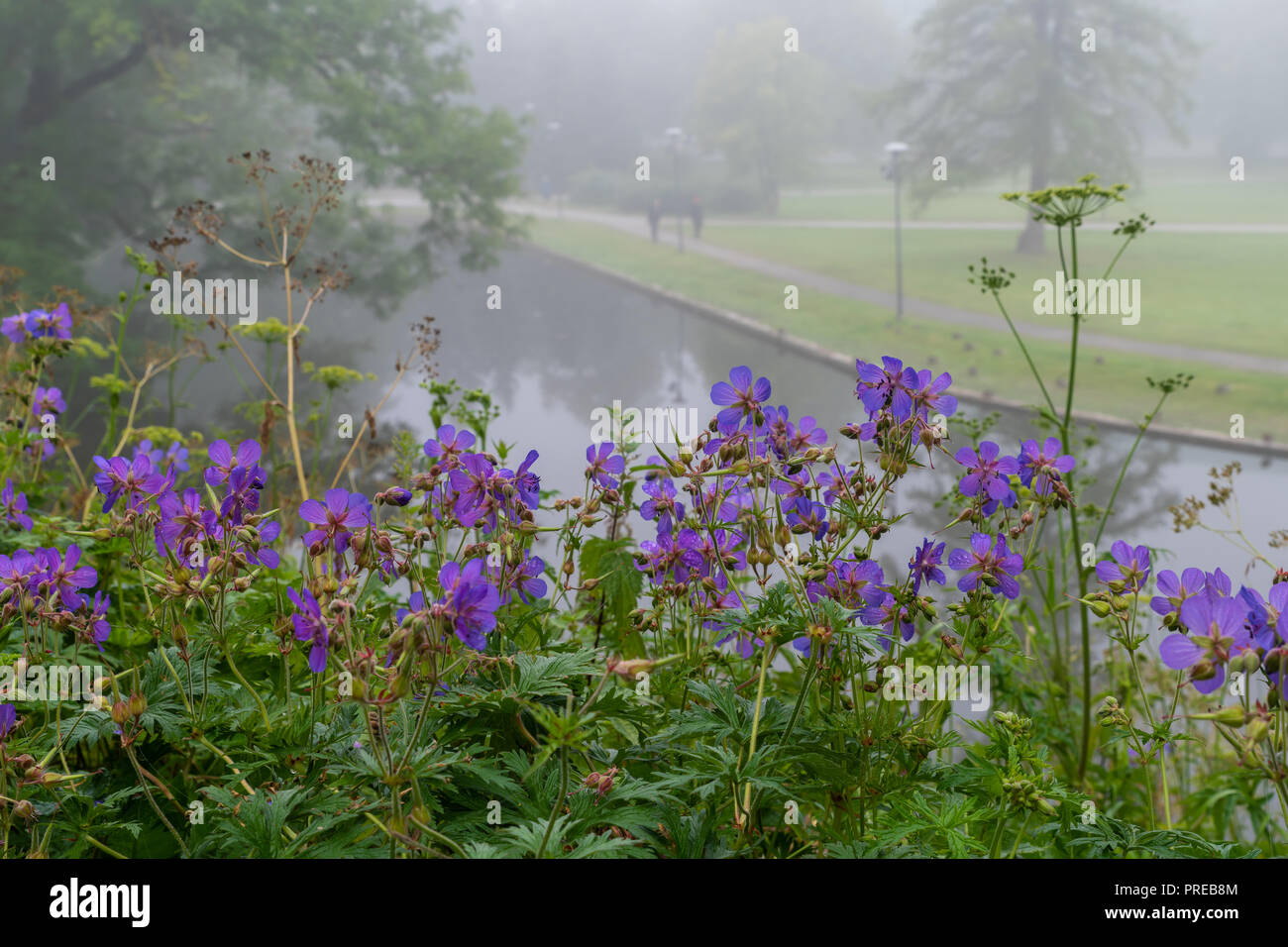 Beautiful Wild Flowers With Walking Path Of Toompark In