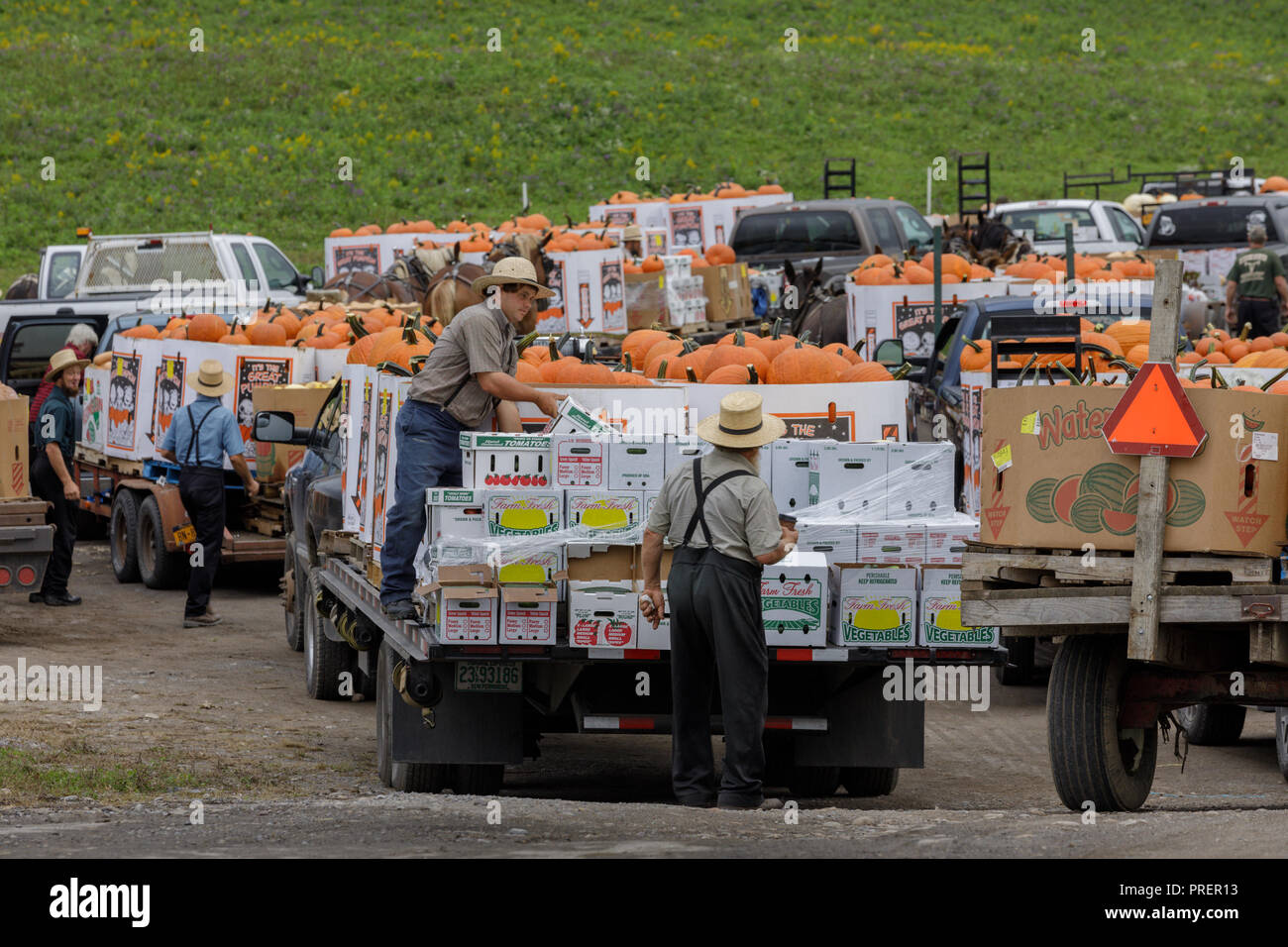 Minden, Mohawk Valley, New York State: Autumn harvest pumpkins are trucked in from miles around for the Amish farm produce auction. Stock Photo